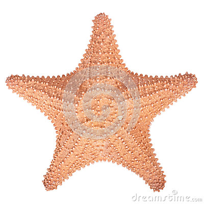 Free Isolated  Starfish On White Background Royalty Free Stock Photos - 64744208