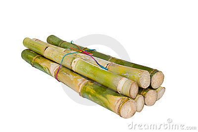 Isolated Sugarcane