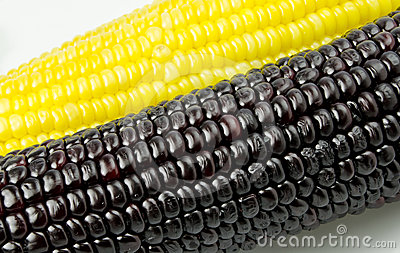 Isolated texture of sweet purple corn