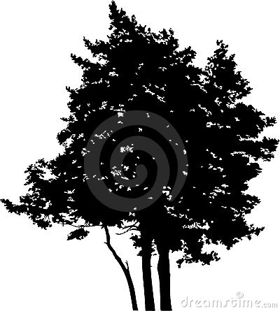 Isolated tree - 15. Silhouette