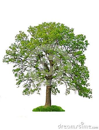 Free Isolated Tree Stock Photo - 1821590