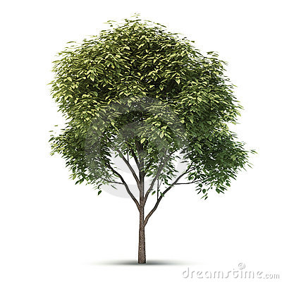 Free Isolated Tree. Royalty Free Stock Images - 23363669