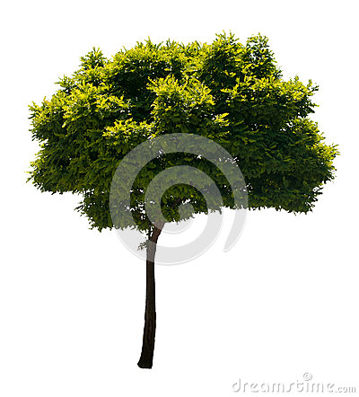 Free Isolated Tree Royalty Free Stock Photo - 25221715