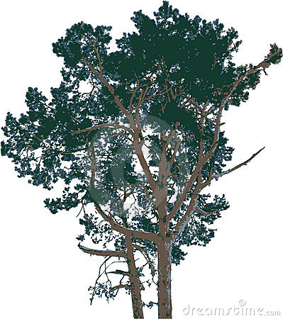 Isolated tree - 9. Vector