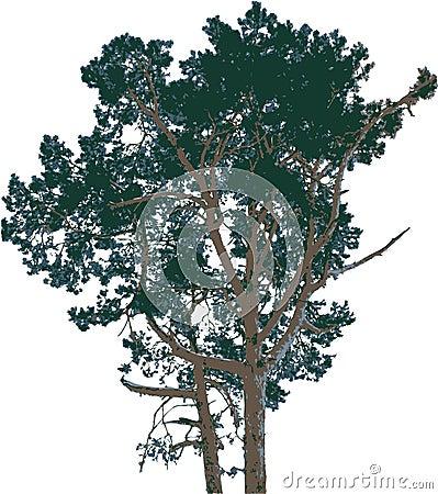 Isolated tree - 9. Vector