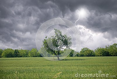 Isolated tree in countryside