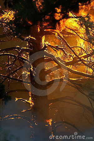 Isolated tree fully engulfed in flames