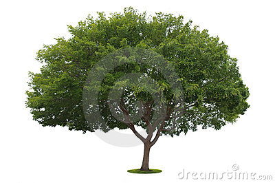 An isolated tree no4