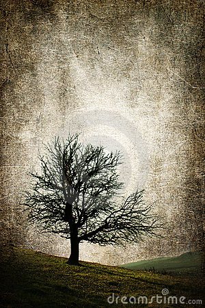 Isolated tree vintage concept illustration