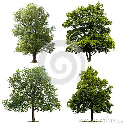 Free Isolated Trees Royalty Free Stock Image - 29085166