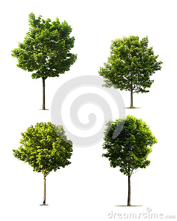 Free Isolated Trees Royalty Free Stock Image - 29085176