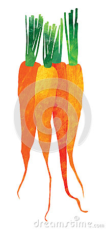 Isolated Watercolor carrots illustration