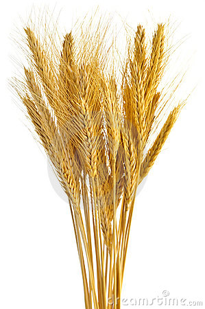 Free Isolated Wheat Ears Stock Photos - 7845333