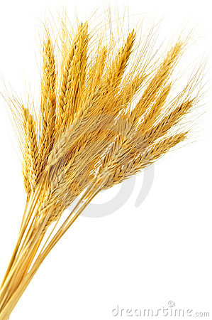 Free Isolated Wheat Ears Stock Photography - 8850502