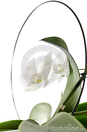 Isolated white orchid