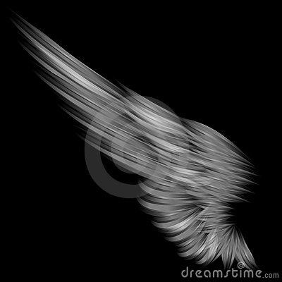 Isolated wing on black background