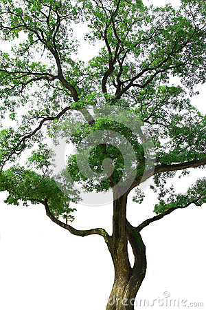 Isolation of Tree branch