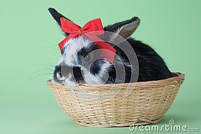 Isolerad röd prickig tie för bow kanin