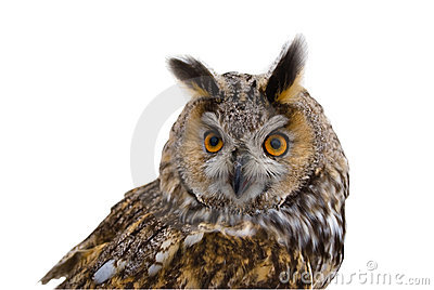 Isoletated owlrovdjur