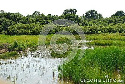 Isonzo Wetland Nature Reserve 7
