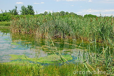Isonzo Wetland Nature Reserve 9