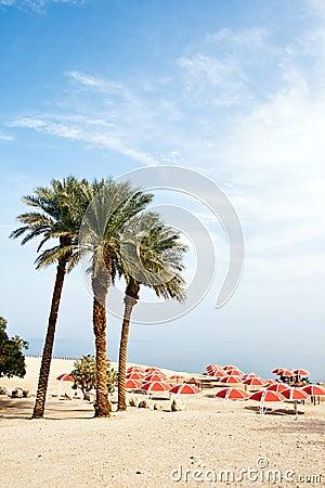 Israel desert oase