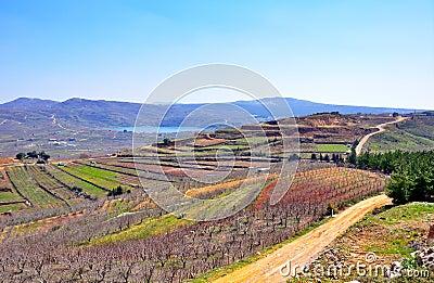 Israel Landscape Pictures