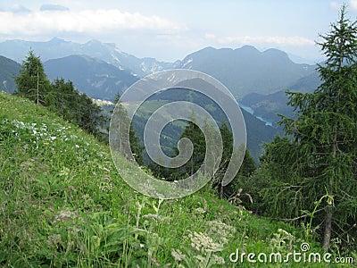 Italian Alp View