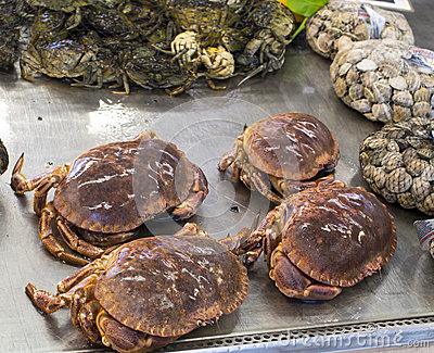 Italian crab