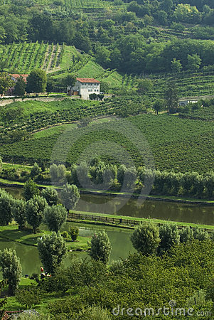 Free Italian Fishing Pond...in Wine Country Stock Images - 1182084