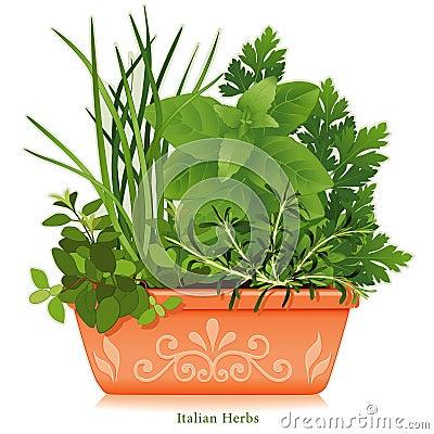 Italian Herbs in Clay Planter