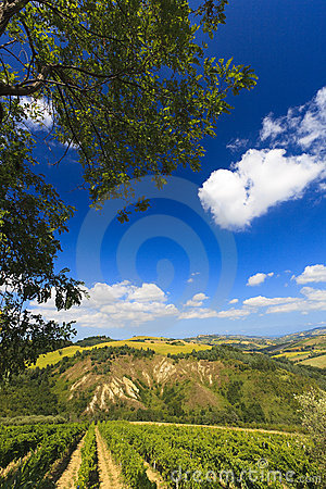 Free Italian Landscape With Vineyard In Summer Stock Images - 15171194