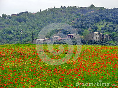 Italian farm with red poppies