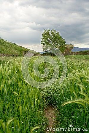 Italian riverbank landscape