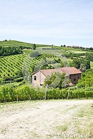 Italian villa with vineyard: spring season