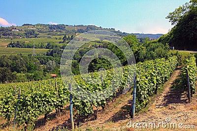 Italian vineyard in Piedmont