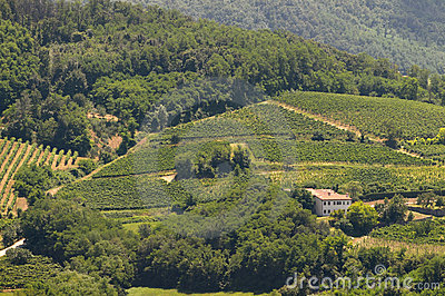Italian vineyards on hills