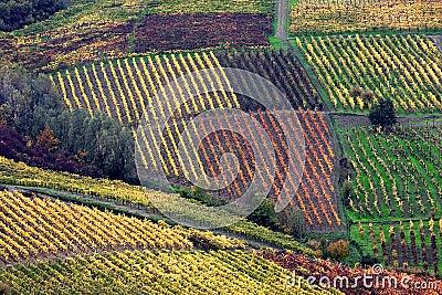 Italian vineyards in Oltrepò Pavese