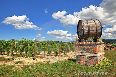 Italian winery. Castiglione Falletto, Italy.