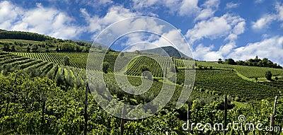 Italienische Weinberge