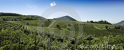 Italienisches Weinberg-Panorama