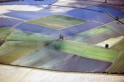 Italy, Lombardy,landscapes rice field from see aer