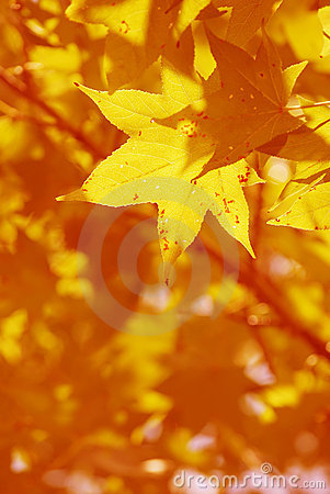 Free Its Fall Stock Photo - 6581880