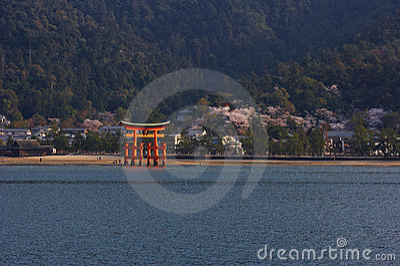 Itsukushima Shrine with Torii At Cherry Blossom