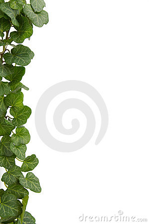 Free Ivy Stock Photos - 3609483
