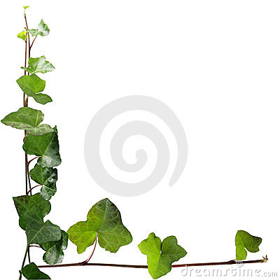 Free Ivy Stock Photos - 7141623