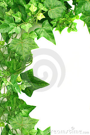 Free Ivy Border Royalty Free Stock Image - 1507866