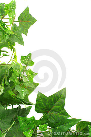 Free Ivy Border Royalty Free Stock Photos - 1507908