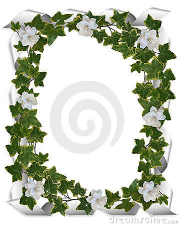 Ivy border with gardenias