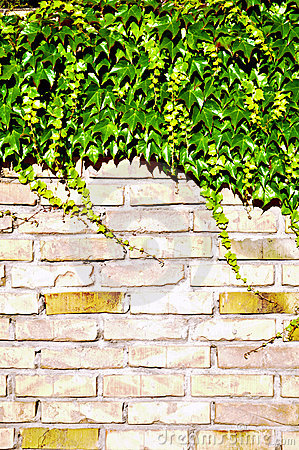 Ivy and brick wall